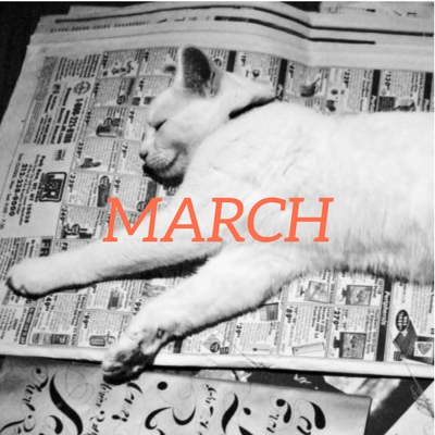 cat lying on top of newspapers with March title