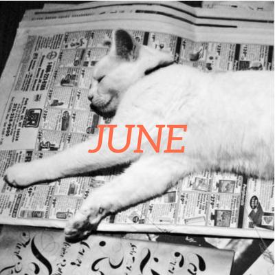 cat lying on newspaper