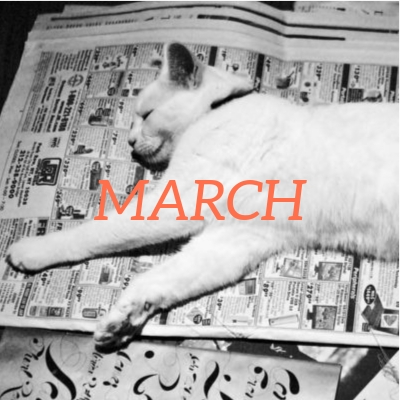 Cat lying on top of newspapers with headline